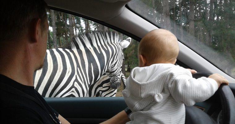 Safari Zoo au Domaine de Thoiry